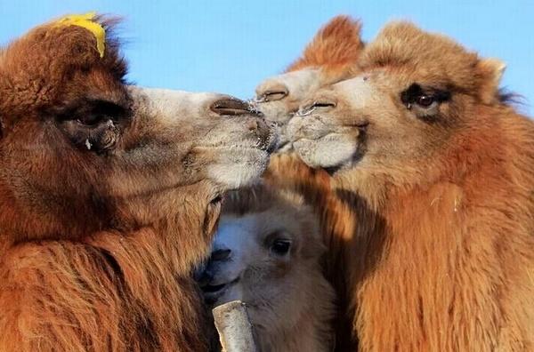 动物温暖呵护的图片
